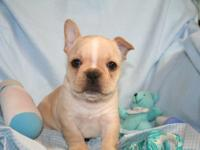 we have 8 precious French Bulldog puppies available.12