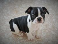 Hi, I have 1 little guy available. He is a complete