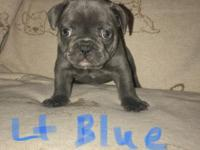light blue collar blue boy with small white marking on