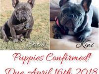 Puppy's are here! This is a repeat breeding for these 2