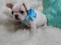 Beautiful, loving, and cuddly French bulldog ready to