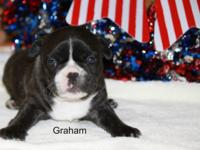 Thank you for your interest in our little one Graham.