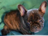 The Most adorable lil runt only by 4 oz. Brown Redish