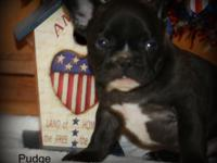 Thank you for your interest in our little one Pudge. We