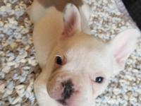 Experienced registered breeder: Ready now** 1 boy,1
