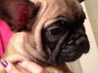 I have French bulldogs pups for sale: two females and