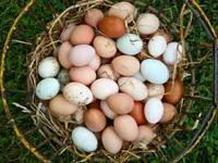 Fresh eggs $2.50 a dozen. $2 a dozen if you bring your