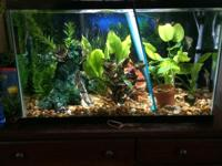I have two 30 Gallons Freshwater Running aquariums and