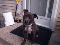 I am looking for a good home for my pocket pit. She is