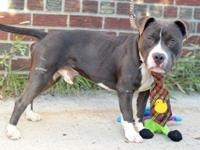Brodus came in as a stray, so his past behaviors in a