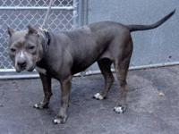 Cindy is located at Manhattan Animal Care and Control.