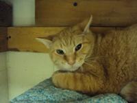 Frisco is a very shy boy who at one time would run at