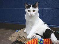 Friska's story Friska is a young kitty who enjoys