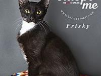 Frisky's story You can fill out an adoption application