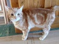 Frisky's story From barn cat to housepet! This super