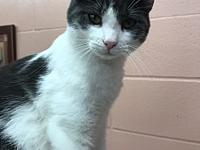 Frisky's story Frisky is a very sweet, white and grey ,