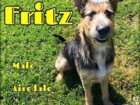 Fritz's story You can fill out an adoption application