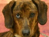 Fritz's story Looking for a mini Dachshund? You've come