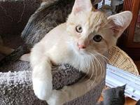 Frodo18's story All Purr Partners Adoptable Cats &