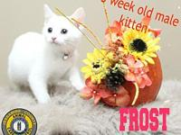 Frost's story You can fill out an adoption application
