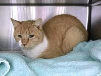 FROSTY's story Frosty came in as a stray and is
