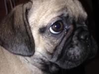 SIMPLY ADORABLE FRUGS 13 weeks old If you like the