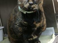 Our senior girl Fruitcake is absolutely more to love!