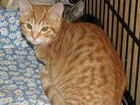 Fryer (baby boy)'s story Meet Fryer a spotted red tabby