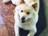 Fufa is a 3.5 year old Chow Husky Mix. She is super