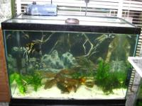 I need to cut down on my aquariums, so I have an entire