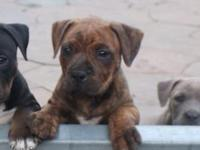 up forsale I have the last 2 female puppies from the