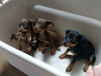 3 males 1 Female 4 months old, cute and healty. call or