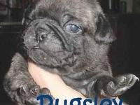 I have 2 purebreed male pugs, born April 14th. 9 weeks