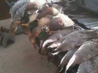 Death Row Waterfowl provides fully guided in your face