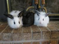 ARBA registered rabbitry Jumpin' Fur Joy has 5 fully