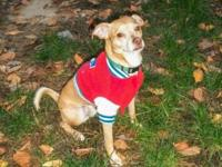 Dooley is a 2 year old. 17 lb fun, energetic handsome,