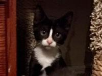 Foster location: Boise, ID Little Alucard is one of 5