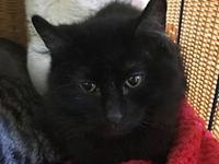 Furball's story Furball Age: 4 years old DSH/Spayed