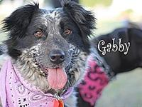 Gabby's story Gabby sweet as can be and very loving to