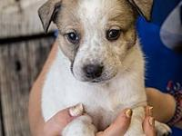 Gabby's story Woof Woof! My name is Gabby and I am a