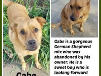 GABE  Gabe is a gorgeous German Shepherd mix who was