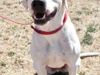 Gabriel is a Terrier/Pointer mix.  He is a happy,