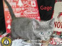 Gage's story You can fill out an adoption application