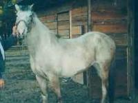 I have an older walkaloosa mare for sale. (For the
