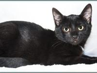 GALE's story $97.50 FEE INCLUDES: neutering/spaying,