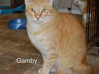 Gamby's story Gamby is a 6 year old Orange Tabby. He's