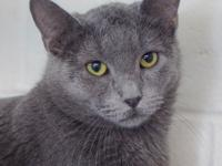 Visit Gandalf at our Adoption Center open Monday