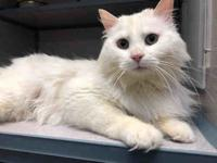 GANDALF's story HI my name is Gandalf! I am a beautiful