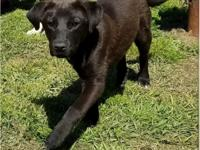 Gantu is a 5 to 6 month old puppy who will be joining