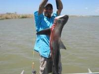 We do all sorts of trips, Trophy Alligator Gar in the